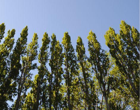 bos-bomen